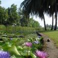 Lamlukkaゴルフコースの池